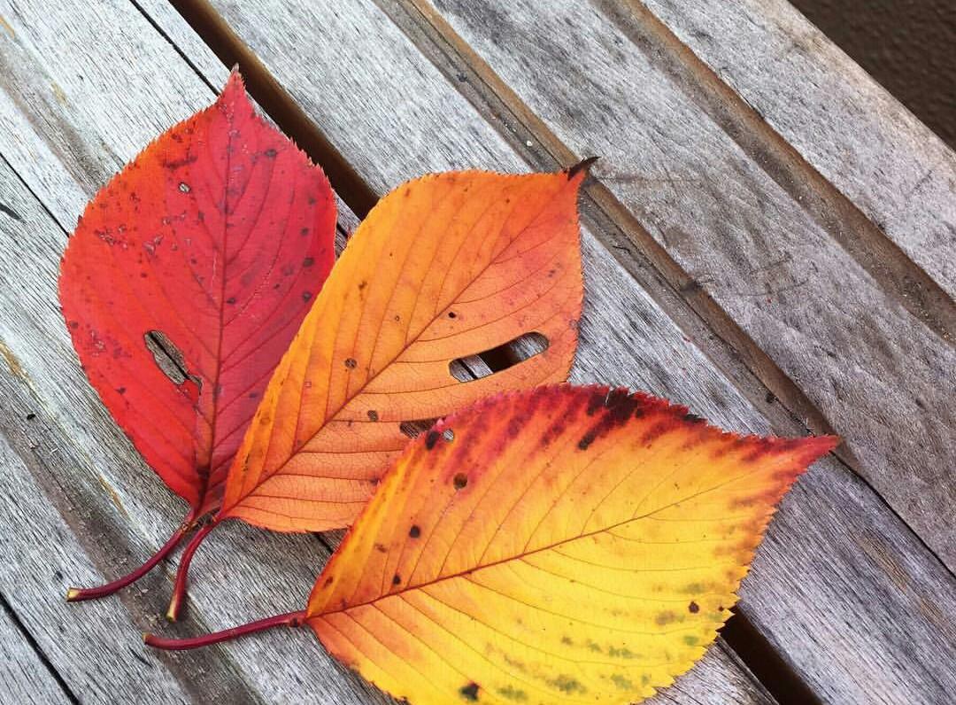 秋の衣替えに防虫対策を