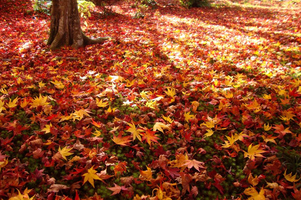 秋の紅葉には、オロビアンコを。