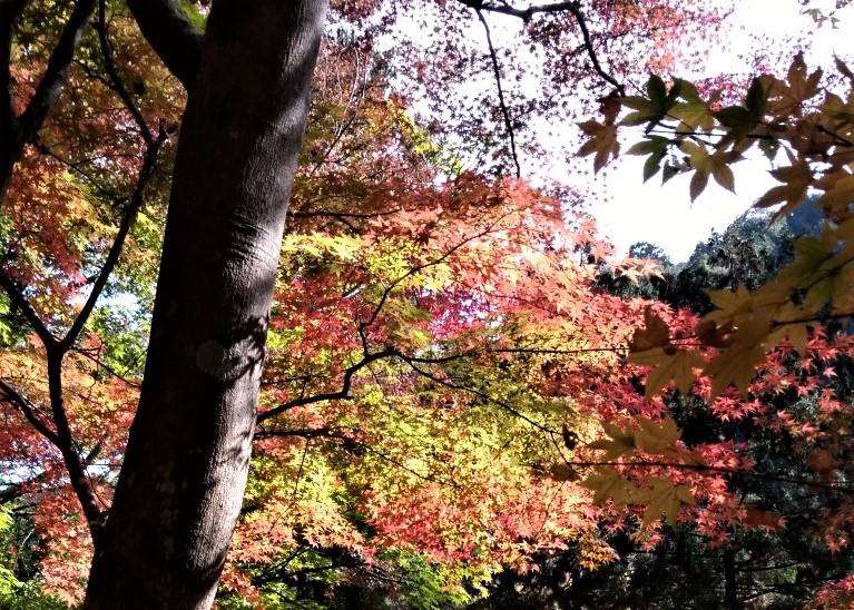Season of autumn leaves
