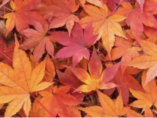 秋冬物も洗えます
