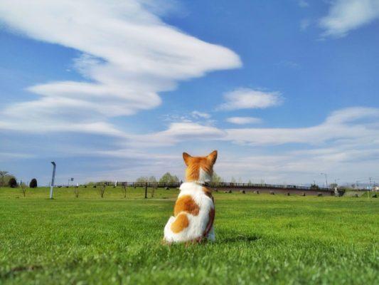 空模様が気になりますが。