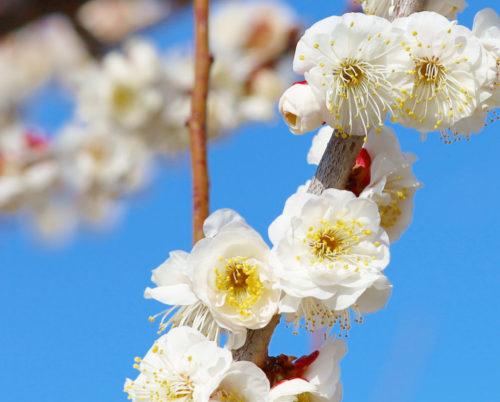 春を求めて・・・